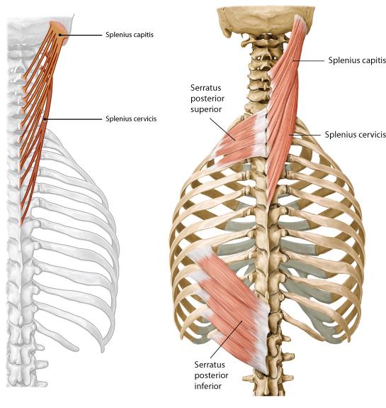 7c004_f101f_bottom, Human Body